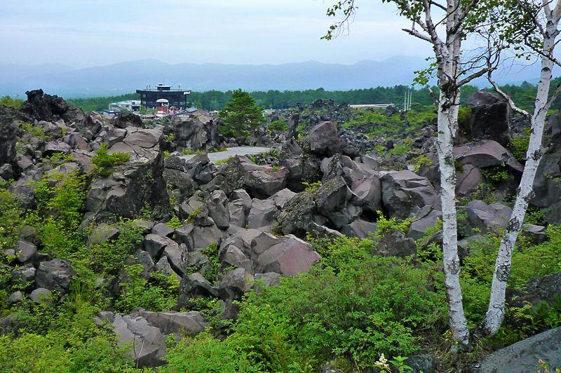 200年前の溶岩と樹木の芸術