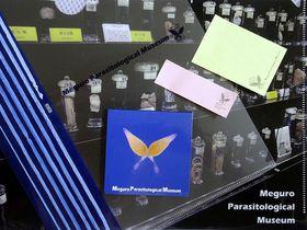 世界で一つだけの博物館!超絶デートスポット・目黒寄生虫館