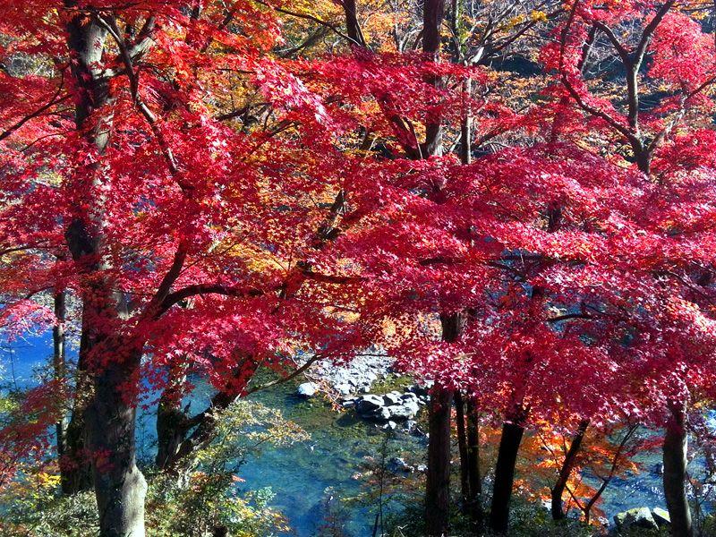 京都の紅葉を埼玉で。山あり谷ありの歴史に彩られた嵐山渓谷