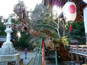木は気に通じる!いわき市の知られざるご神木パワースポット