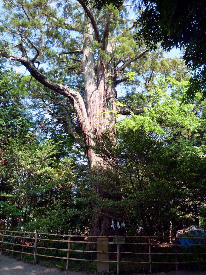 自然の誇る、ご神木パワースポット