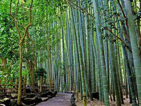 神奈川の絶景スポット10選 都心周辺の美しい景観を満喫!