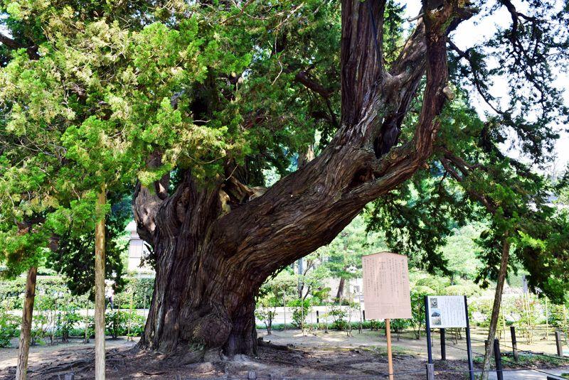 歴史ある『建長寺庭園』