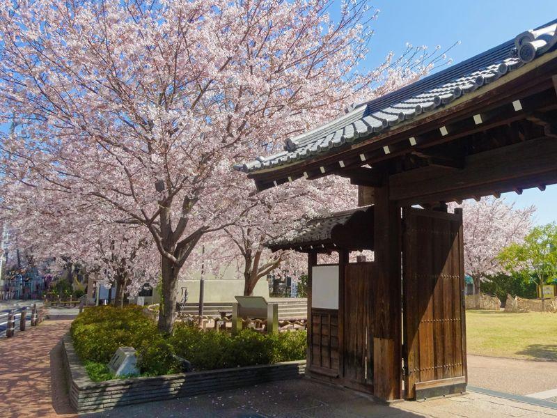 ソメイヨシノ発祥地!豊島区駒込でルーツを愉しむお花見散歩