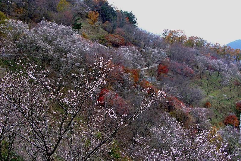 春と冬に花見ができる「桜山公園」