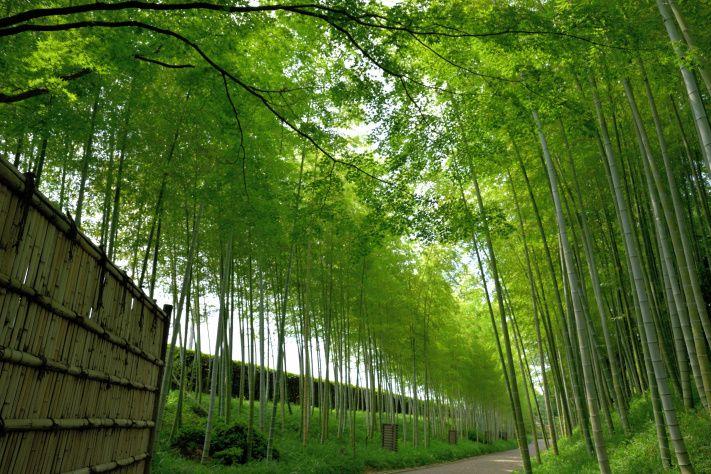 2時間サスペンスドラマと云えば京都でしょう