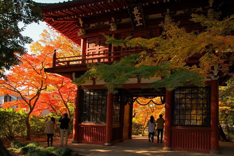 千葉県のおすすめ紅葉スポット7選 12月まで楽しめる!
