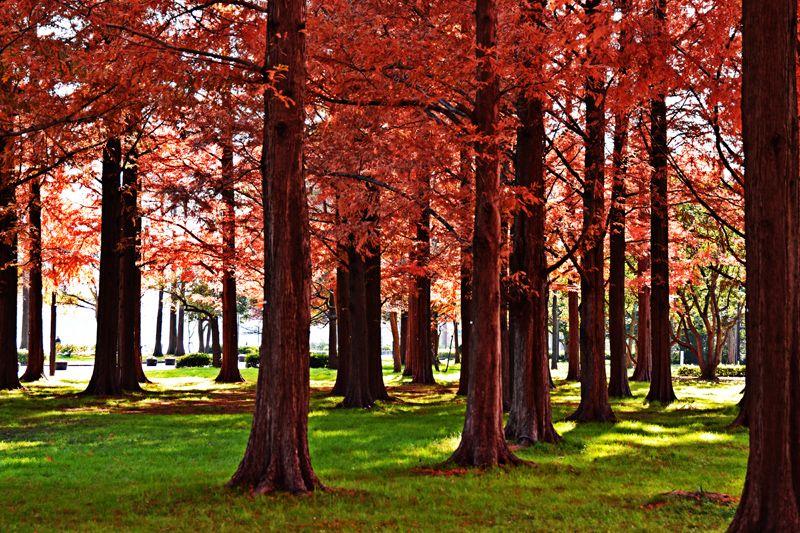 静かな湖畔の森の陰