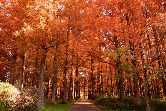 紅葉の森はメルヘン