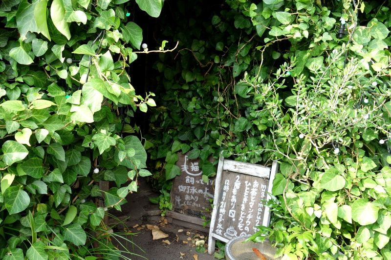 緑の入り口が癒しへ誘う