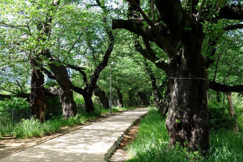 ノルウェイの森で縁結び!?飯田橋・東京大神宮への恋愛参道