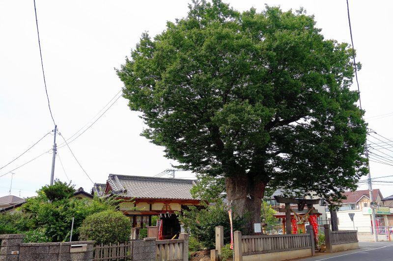 愛の町で猿が子授け・安産祈願の「三ツ木神社」