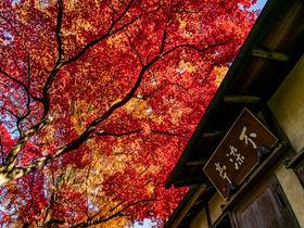 静寂の燃える赤!紅葉の名所・川越「中院」の映えスポット