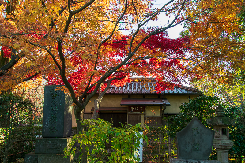 燃える紅葉の寺院