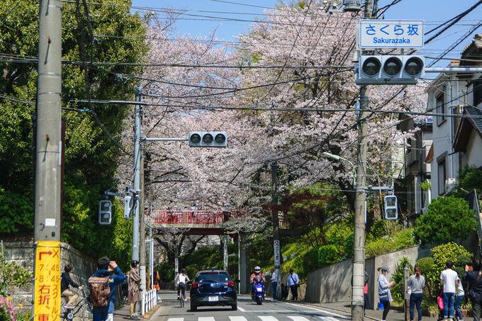 200万枚の大ヒットにより観光名所となった「桜坂」