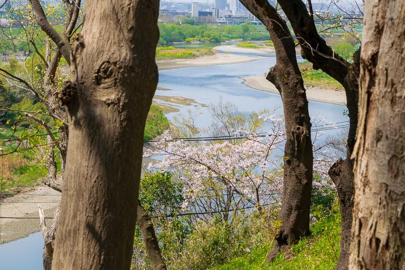 住民の憩いの場「多摩川台公園」のお花見