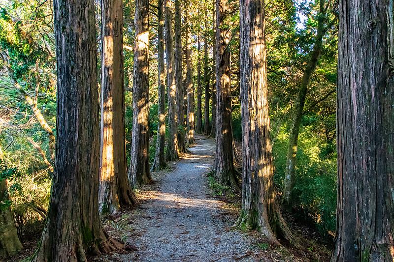 自然に癒される散策路