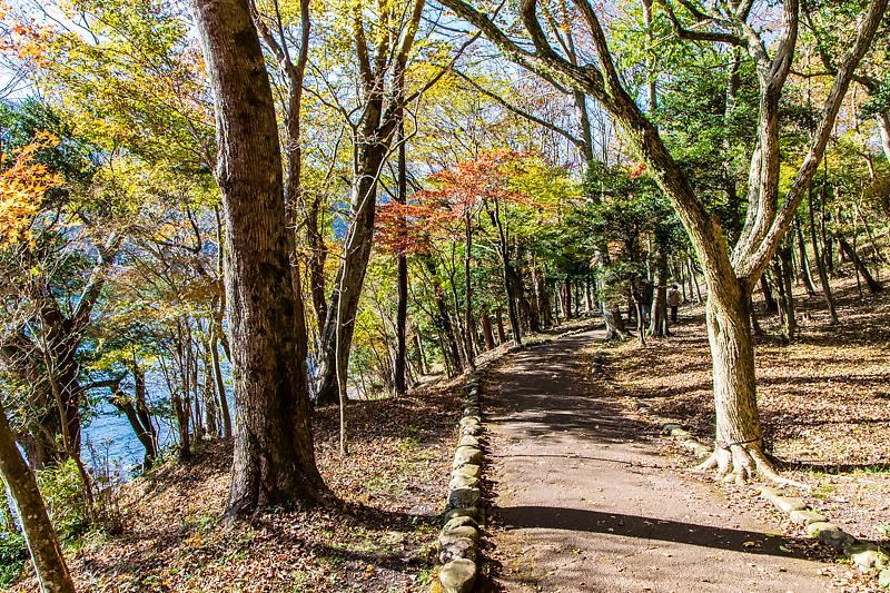 緑と水に癒される散策路