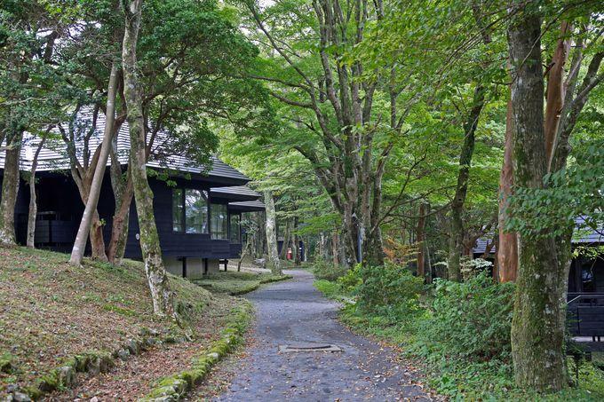 林の中に宿泊施設が点在