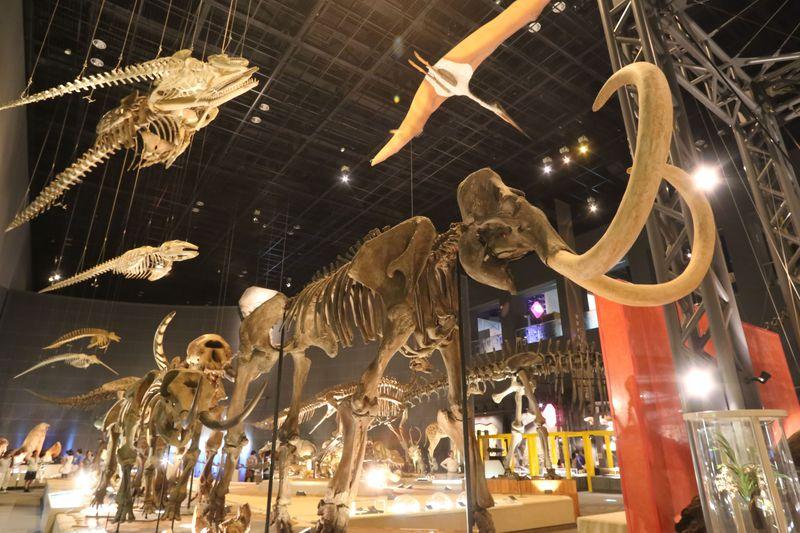 小田原・地球博物館で生命の起源を学び、ご先祖様に会おう