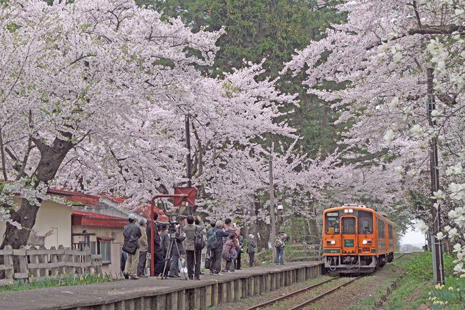 桜のトンネルの中にホームがあります