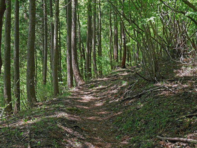 登山道は樹林帯の中を続きます