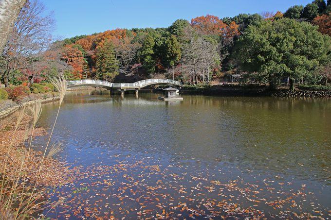 天正年間に農業用水の池として拓かれた薬師池
