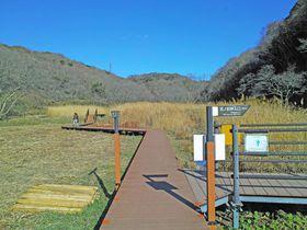 都心から至近。三浦市「小網代の森」で湿原歩きを楽しもう