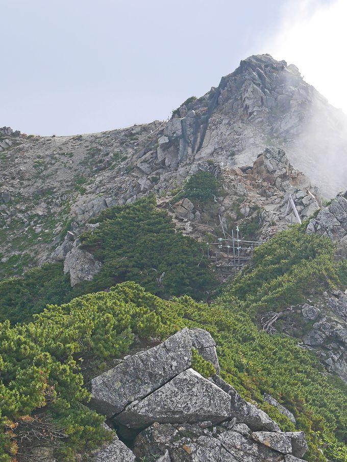 ハイマツ帯の中を道は唐松岳へ