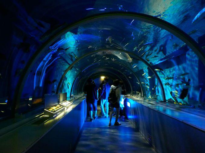 海底にいる気分を味わえる、ニクス城の「アクアトンネル」