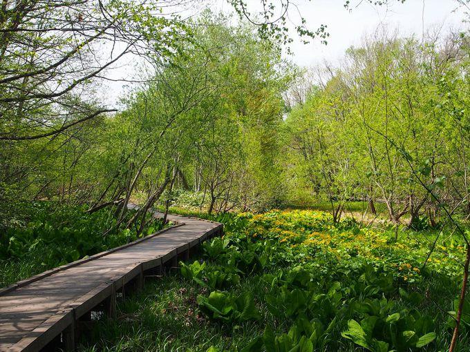 春に水芭蕉が見られる、平岡公園の湿地帯の木道