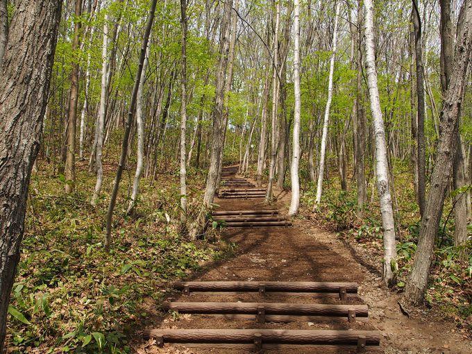 ちょっとしたハイキング気分。森林浴を楽しめる遊歩道