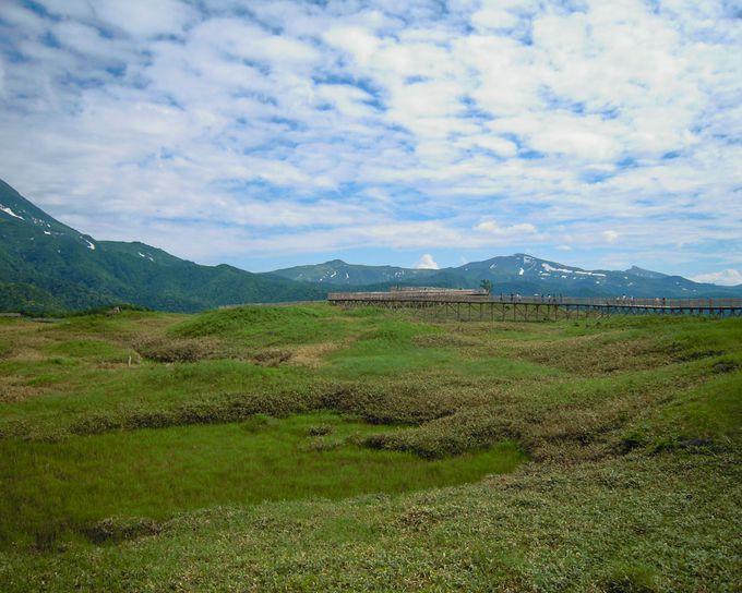 撮影シーンその4:湿原の上にある高架木道の姿も絶景!