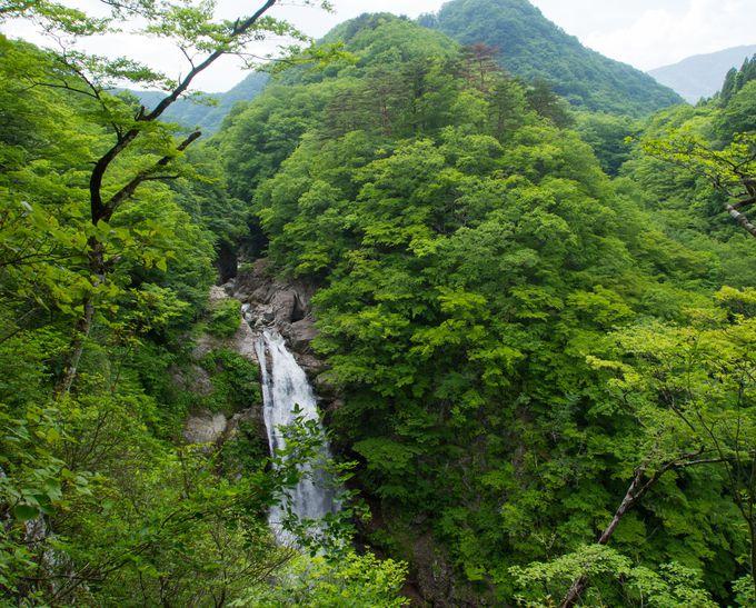 遠くから近くからも楽しめる秋保大滝