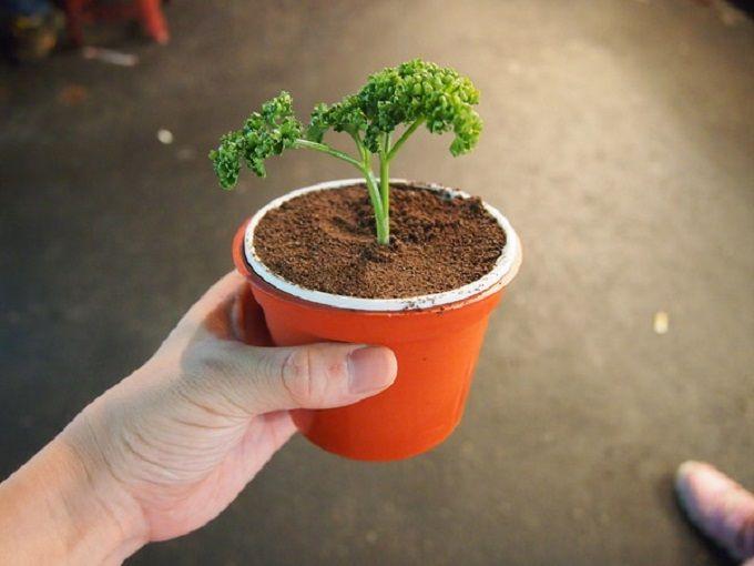 植木鉢によそう「盆栽アイス」