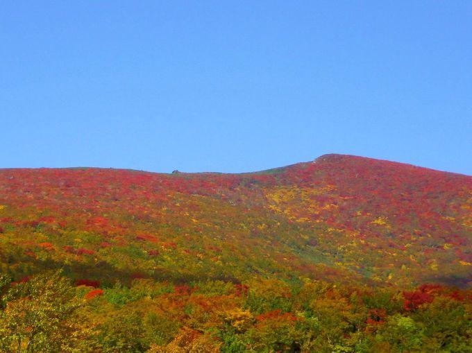 紅葉で赤色になる山!栗駒山(宮城側)いわかがみ平