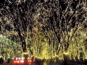 仙台の圧巻イルミはまるで光の森!SENDAI光のページェント