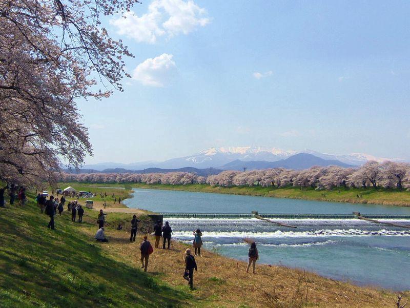 白石川堤一目千本桜で一番のビューポイント!優雅な風景の韮神堰