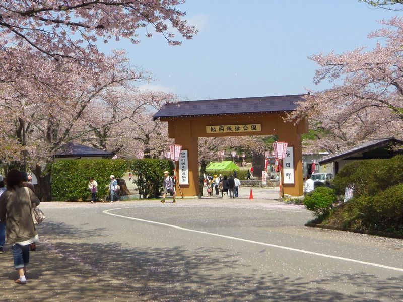 桜の開花時期は「しばた桜まつり」開催!夜桜も楽しめます