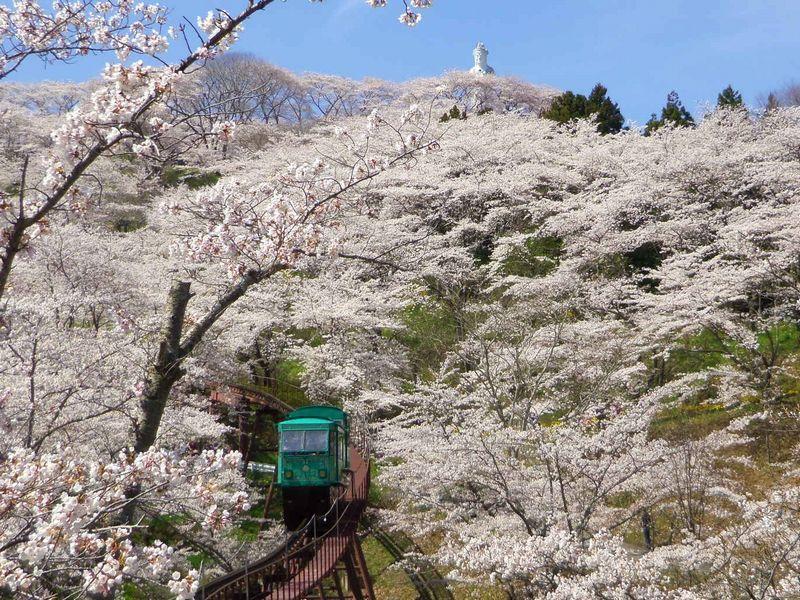 千本桜2名所を同時に花見三昧できる山!宮城・船岡城址公園