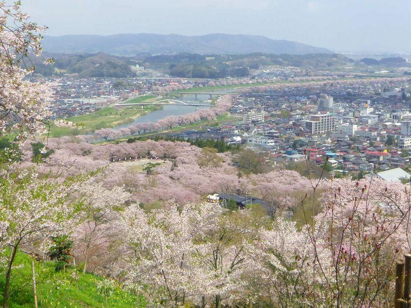 「一目千本桜」を観るなら「船岡城址公園」がおすすめ