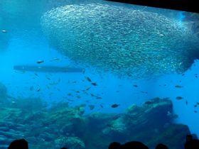 仙台に新たな大規模水族館が誕生!「仙台うみの杜水族館」