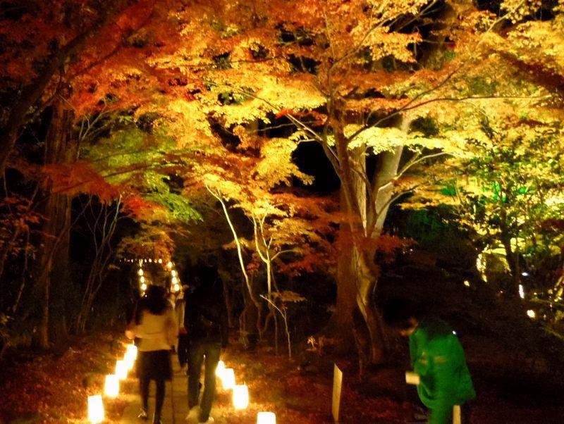 ライトアップされた紅葉がキレイ!「円通院」の紅葉は夜が本番