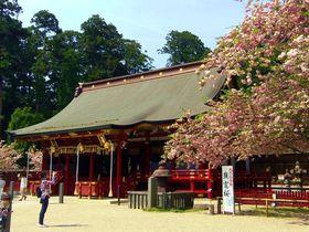 東北を代表するパワースポットは桜の名所!宮城「鹽竈神社」