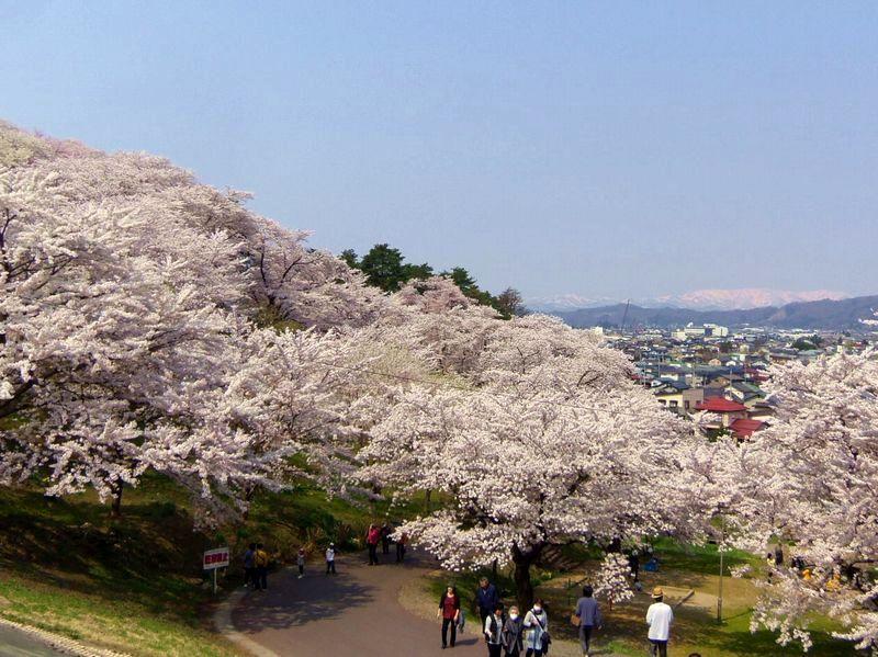 桜の名所百選に選出されている「烏帽子山千本桜」