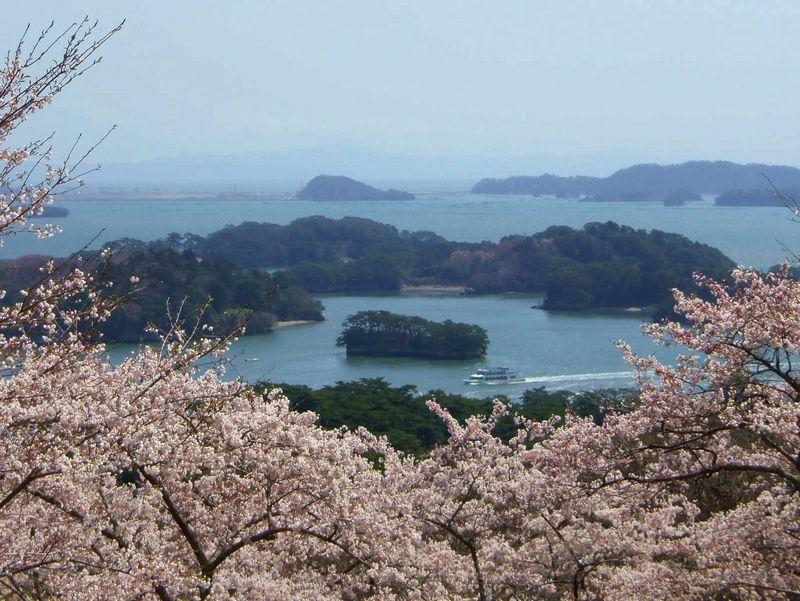 風光明媚な松島と桜を同時に眺める贅沢!