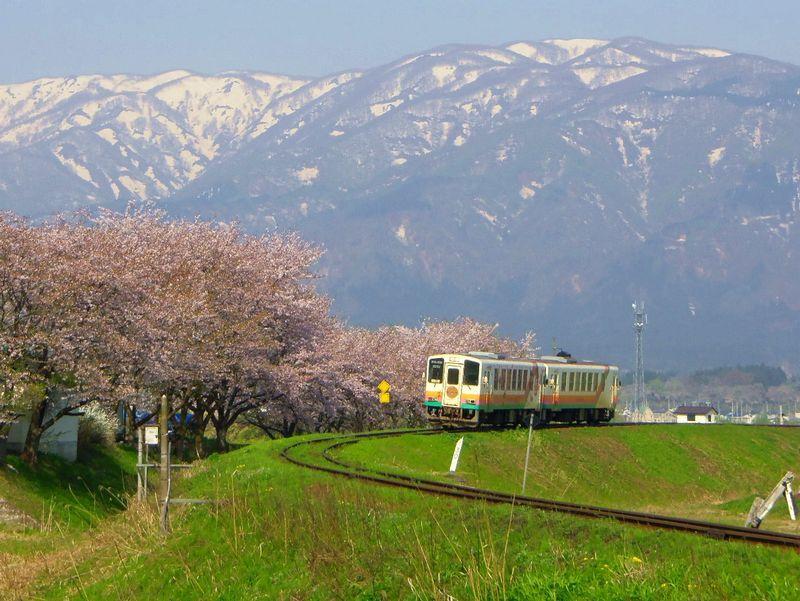 山形鉄道沿線に桜の名所が続く〜置賜さくら回廊