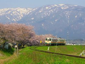 樹齢千年の長寿桜4本を巡る〜山形鉄道沿線・置賜さくら回廊