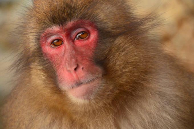 猿の撮影方法
