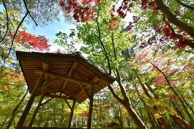 新緑が薫り 紅葉が映える 名園「松雲山荘」